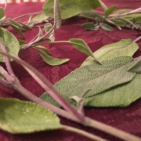 Fresh sage leaves, an herb used in Poultry Seasoning
