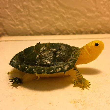 Tiny Turtle Toy